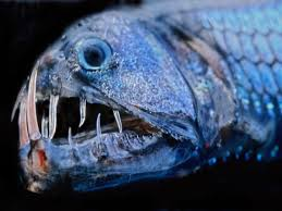 Hewan Laut Paling Aneh Dan Mengerikan