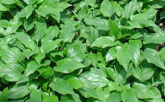 Image result for budidaya tanaman dan binatang
